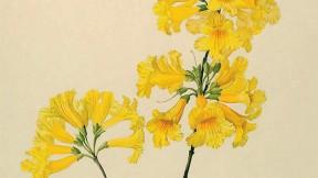 Margaret Mee painting of yellow trumpet tree