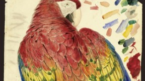 Study of a Red and Yellow Macaw <i>(Macrocercus aracanga),</i> now known as Scarlet Macaw <i>(Ara macao).</i> Watercolor over graphite on paper.
