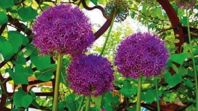 Photograph of purple flowers