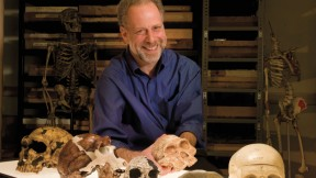"""A skull session with human evolutionary biologist  Daniel Lieberman in the fossil room at the Peabody Museum.  Millions of years  of natural selection have shaped the human head. From left to right: a  Neanderthal; <i>Homo erectus; Homo habilis;  Australopithecus africanus; Pan troglodytes</i> (common chimpanzee);  <i>Homo sapiens</i> (human).  """"Gonzo,"""" a Neanderthal skeleton, stands in the back."""